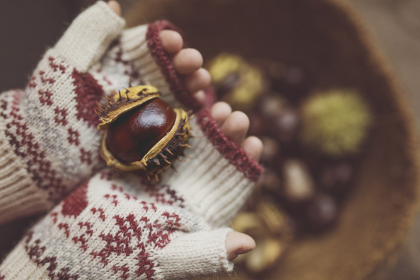 Horse Chestnut in Hands