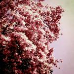 Maledetta primavera