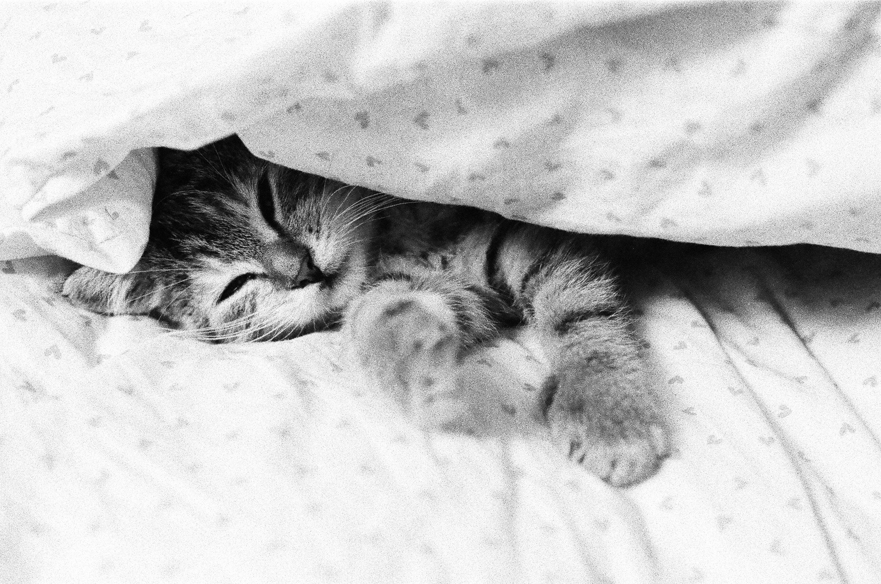gatto-che-dorme-manolino