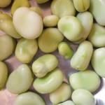 Pasta con le fave fresche, pecorino e pancetta: la ricetta