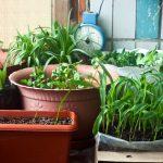 Orto sul balcone: 5 piante che vi daranno grandi soddisfazioni